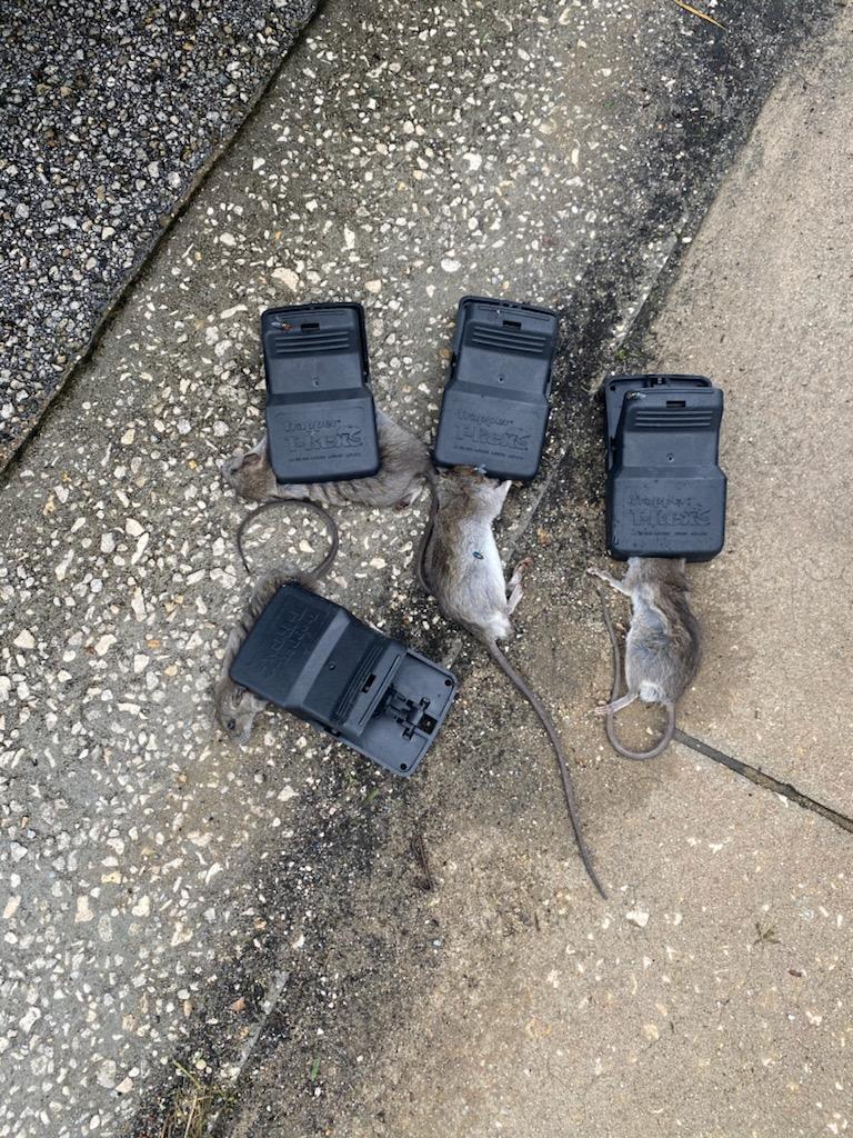 Mouse & Rat Control