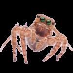 Venom Pest Control   Clermont Florida