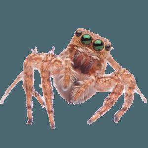 Venom Pest Control | Clermont Florida