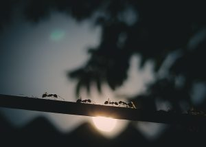 Carpenter Ant Infestation | Clermont Florida
